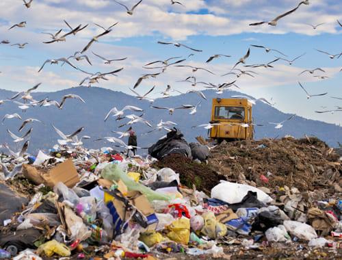 проблема мусорных отходов, вывоз мусора в Одинцово, вывоз строительного мусора в Одинцово, вывоз строительного мусора в Одинцовском районе, вывоз мусора в Одинцовском районе, вывоз мусора одинцово, Солослово, Горки-2, Горки-10, Барвихи, Жуковка, Раздоры, Рождественно, Лесные Дали, Лесной городок, Голицыно, Жаворонки, Перхушково,вывоз мусора в одинцовском районе, заказ контейнера на вывоз мусора, вывоз мусора контейнер 20 м, вывоз мусора контейнер 27 м, вывоз мусора контейнер 32 м, вывоз мусора контейнер 36 м, вывоз строительного мусора в одинцово, бункер для вывоза мусора, договор на вывоз тбо, вывоз мусора одинцово, бункер для мусора 8 м, контейнер под мусор, вывоз строительного мусора, вывоз грунта в одинцовском районе, вывоз мусора в голицыно, вывоз мусора контейнер 8 м одинцовский район, одинцово вывоз мусора, заказать контейнер для мусора, вывоз мусора строительного, контейнер для вывоза мусора, вывоз мусора ооо, вывоз строительного мусора одинцово, вывоз мусора, контейнер для мусора 8 кубов цена, вывоз мусора одинцово контейнер 8 м, строительные контейнеры для мусора, вывоз снега одинцово, вывоз твердых отходов, договор на вывоз бытовых отходов, вывоз мусора в одинцово, тбовывоз мусора, вывоз мусора контейнер 8 м, крупногабаритный мусор, вывоз мусора голицыно, заказать мусорный контейнер в одинцово, контейнеры для раздельного сбора мусора, мусор контейнер, контейнер для мусора заказать, чистый город вывоз мусора, вывоз и погрузка строительного мусора, вывоз металлолома одинцово, прием мусора на свалку, вывоз мусора одинцово недорого, утилизация мусора, уборка мусора, вывоз мусора контейнер 8 м одинцово, вывоз мусора фото, вывоз мусора контейнер одинцово, вывоз мусора строительного цена, сколько стоит заказать контейнер для вывоза мусора, контейнер вывоз мусора, вывоз мусора из квартиры с грузчиками, контейнер 0 м вывоз мусора, погрузка и вывоз строительного мусора, свалка мусора, вывоз хлама, контейнер для строительного мусора заказать, тбо вывоз, вывоз строит